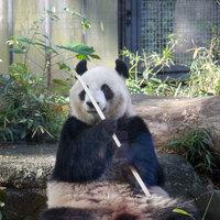 【上野動物園入場券付】親子パンダのシンシン&シャンシャンを見に行こう☆《素泊まり》上野駅から一駅!