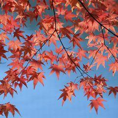 """【期間限定】=実りの""""秋穫祭""""=松茸・合鴨・神戸牛に秋刀魚♪ 美食の秋を五感で楽しむ贅沢会席"""