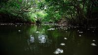 【お食事なし・温泉付】素泊りだからお得☆世界遺産の豊かな自然と日本最南端の温泉に癒されるのんびり旅♪