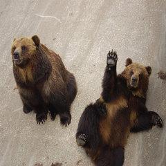 想い出作りin洞爺 『熊牧場編』