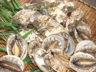 【豪華 極旨よくばりグレードアッププラン】常陸牛陶板焼・あわびソテー・キンキ煮・はまぐり焼・近海料理