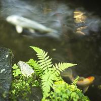 ◆ナガシマスパーランド入場券付◆夏を思いっきり楽しむ!≪遊園地♪×プール♪×温泉♪≫