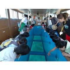 ≪ お得な観光 ≫ 竜串( たつくし )発 グラスボートに乗って 海底見学 夕食は 和み会席