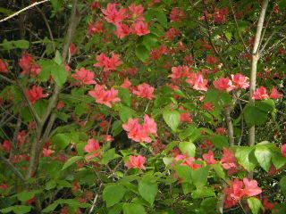 ペンション花の木 関連画像 3枚目 楽天トラベル提供