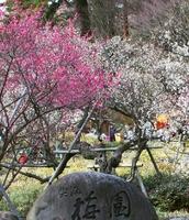 【通常より1000円OFF】☆早咲きの梅と桜を見に行こう♪ 「地魚舟盛りコース」