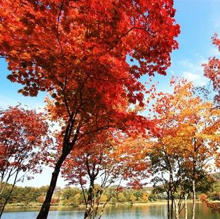 1泊2食付フルコース 高原で過ごす秋♪信州蓼科・女神湖