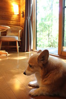 那須高原 愛犬と泊まれる 森のコテージ くるみの木