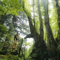 【但馬高原植物園コラボ企画】とっておきの朝ごはん♪木漏れ日モーニング〜大自然で過ごす至福のひと時〜