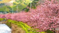 【2/24〜4/28】春の限定特典<季節のお刺身盛り合わせ>付き♪春のお散歩プラン