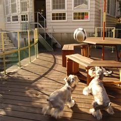 【平日限定】ハーブパックで愛犬の皮膚&美容ケア♪〜アーユルヴェーダプラン〜