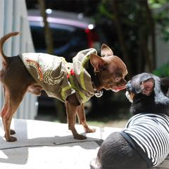 伊豆高原で愛犬とまったりday★スタンダードプラン【1泊2食付】