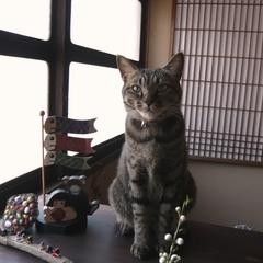 【楽天限定ポイント10倍】無料貸切風呂と地産地消の手作り料理♪まねき猫プラン