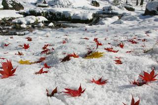 冬*2泊3日・癒しの森でのんびり過ごすスロウ旅♪しかも10%OFF!