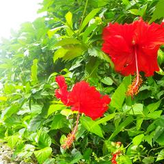 【体験×郷土料理】沖縄伝統文化を満喫!各種体験プランde思い出作り☆伝統工芸