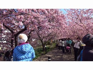 早咲き桜、河津桜祭りで一足早い春♪ 河津桜祭り現地駐車場無料プラン♪ 2食付き 現金特価