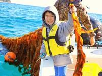 摂ったワカメを食べよう! 期間限定2月10日〜3月21日  船で行く!ワカメ刈り体験プラン♪