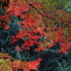 【秋季限定】紅葉狩り!紅葉散策!秋の鳳来寺山◆洗練された本格和懐石料理を堪能◆
