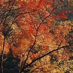 ★紅葉狩り★【秋季限定】紅葉散策!秋の鳳来寺山<薬膳料理◇スタンダードプラン>
