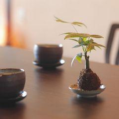 創作和会席と朝夕個室食 ≪上諏訪温泉 しんゆ≫基本プラン