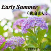 Early Summer Sale(素泊まり)