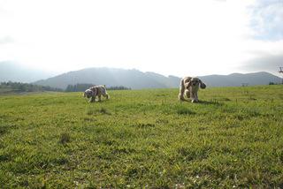 【真田丸】【家族同室】【ファミリー】標高1500mの高原を満喫!Dogコテージシンプルステイプラン