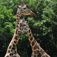 【2食付】東山動植物園GO!GO!嬉しい5大特典付き!!「シャバーニはイケメンでした」プラン
