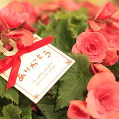 離れ宿で過ごすチョット贅沢な記念日お祝いプラン【くまもとのおふろ】【露天風呂付客室】
