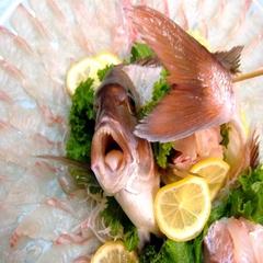 ≪お子様に人気なズワイ付き♪≫ 切り方で変わる鯛刺しの魅力!!天然温泉の泉質も好評プラン【冬得】