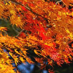 \ 秋の味覚/信州きのこたっぷり大鍋でほっこり・秋旅♪紅葉スポット志賀高原近く!