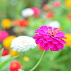 ●フラワーパーク入園券付●子供も大人も楽しめる!四季折々の花が咲き誇る美しい楽園へ♪