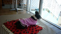 【ワンちゃんと一緒に旅行】提携ペットホテルでお預かり♪〜小スペース〜 (朝食付)