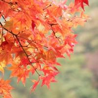 【秋の味覚】《9・10・11月限定》野沢温泉のめぐみ『きのこ』を味わう&秋さがし♪[1泊2食付]