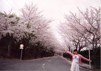 期間限定!春爛漫♪♪河津桜祭り(2/10〜3/10)