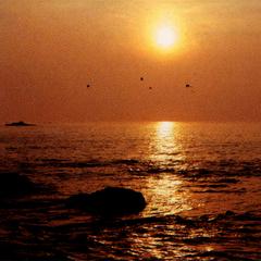 活きアワビ踊り焼き&舟盛り付プレミアム海鮮グルメグレードアッププラン☆《水族館割引券あります》