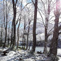 【2食付】ゲレンデまで徒歩0分★冬のスタンダード 【お先でスノ。】
