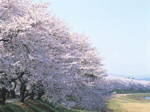 ★★第33回ふくい桜まつり、おでかけ満喫・2食付プラン★★