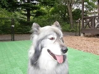 小型〜大型犬OK♪40平米以上の和洋室+専用ドッグラン付き