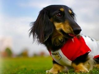 小型〜中型犬OK ゆったり広々の和洋室+専用ドッグラン