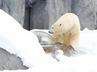 【朝食付】 みんなで『真冬の動物園』に行こうよ♪ 大人気の旭山動物園入園券付きプラン