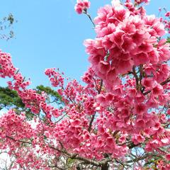 【さき楽28+ポイント10倍】一番桜を楽しむ★得旅キャンペーンエントリーでポイント倍増/朝食付