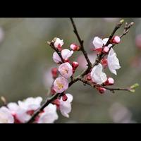 【偕楽園・第125回水戸の梅まつり】〜早春の香り〜花の旅♪特製手打ち蕎麦付≪岩風呂&檜風呂≫