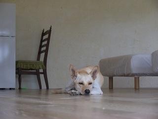 ◆ペットも一緒◆家族・グループで秋・冬の別荘・一組様占有◆ご家族・友人で 1泊から長期の滞在に