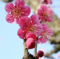 梅咲く季節のセール|2月17日〜3月31日「水戸の梅まつり」開催&波打ち際の隠れ家でひとやすみ