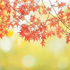 【秋の早期割引】14日前のご予約で通常料金より20%OFF!!オータムスマイルプラン♪
