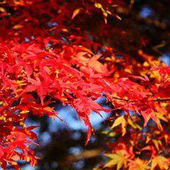 【お土産付き】食欲の秋!美味しいもぎたてフルーツ満載の蔵王へ遊びに来て♪【現金特価】