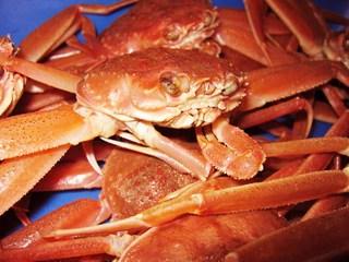 ◆1泊2食付◆ ◎兎に角【美味いカニが食べたい!】獲れたて船内急速冷凍カニプラン