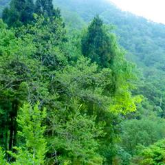 【白山里お散歩プラン】近隣の自然や風景を満喫!お財布にやさしい旅(花びら五色膳)