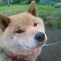 ◆愛犬家に嬉しい!ペットと宿泊OKプラン♪ワンちゃんと一緒に歴史ある秘湯の宿へ【朝食付】
