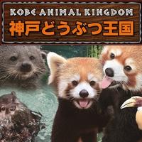 【動物たちとふれあい♪】見て・触れて・体験☆≪神戸どうぶつ王国≫入国券付プラン♪ファミリーに◎