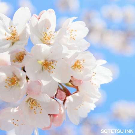 【楽パック限定】春のフレッサスペシャルプラン(食事なし)